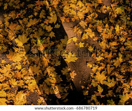 Shadow of Man and Fallen Yellow Foliage of Maple. Cover. Design Elements.