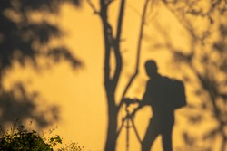 Shadow of photographer with tree branch on yellow wall background in summer