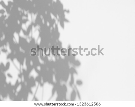 shadow of the leaves on a white wall #1323612506