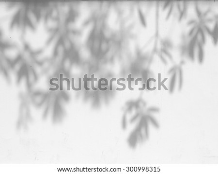 shadow of the leaves on a white wall #300998315