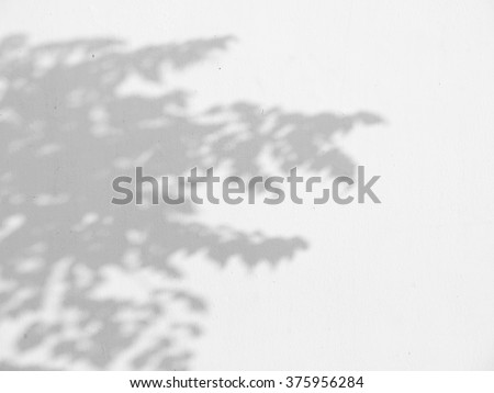shadow of the leaves on a white wall #375956284