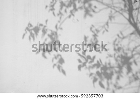 shadow of the leaves on a white wall #592357703
