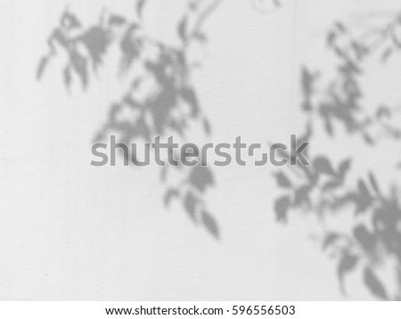 shadow of the leaves on a white wall #596556503