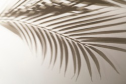 Shadow of tropical leaves background. Shadows from palm leaves on a white wall background.