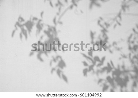 shadow tree on white wall
