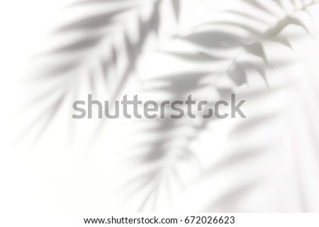 Shadows from the leaves of tropical trees on a white wall