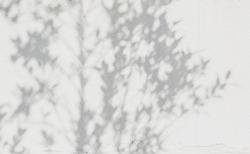 shadows leaf on a white concrete rough texture wall