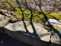 Shadows of Branches on Low Stone Wall and Mossy Ground and Dirt in Sunshine in Early Spring in Shelburne Falls, Massachusetts