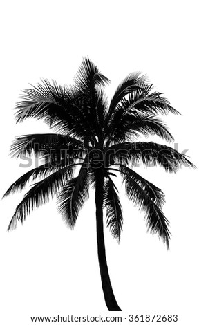 Shadows of coconut trees on isolate background - Shutterstock ID 361872683