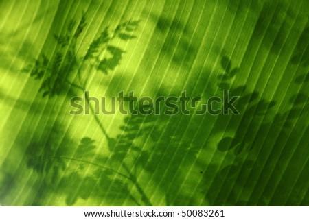 Shadows of leaves falling on a a banana leaf