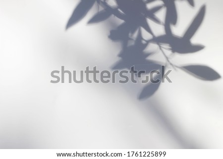 Shadows of olive tree leaves, branches over white wall. Summer background  with a pattern of lens flare. Sunlight overlay, soft blurred photograpy, no people, empty copy space. Mediterranean concept.