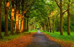 Shady alley in the autumn time. Autumn alley way. Autumn alley trees. Autumn alley park