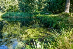 Shady pond with lush green vegetation and a bench at an open spot in a Dutch summer forest.