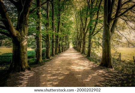 Shady road in the form of a tunnel. Tree tunnel road. Shady tunnel road ストックフォト ©
