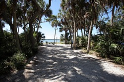 Shady wooded tent camp site in Fort De Soto Park in Pinellas County, Florida on beach and bay.