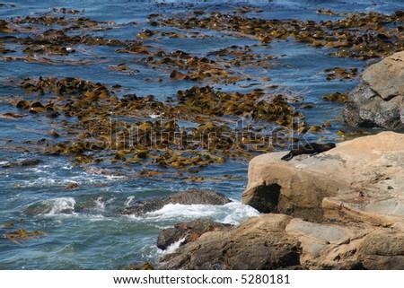 Shag Point New Zealand