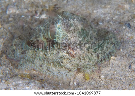 Shaggy octopus camouflages with its surroundings  #1041069877