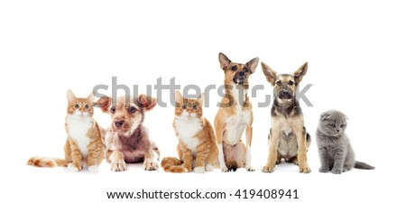 shaggy puppy and kitten looks #419408941