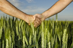 Shaking hands in the field,business on agricultural land