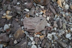 Shale is a fine-grained sedimentary rock that forms from the compaction of silt and clay-size mineral particles that we commonly call mud.