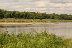 Shallow river with green reed grasses on one bank and different shades of green mixed trees and bushes on the other in the horizon with white birds on the shallow in the summer in Kaunas, Lithuania