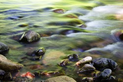 Shallow water and colorful river rocks in filtered afternoon light.