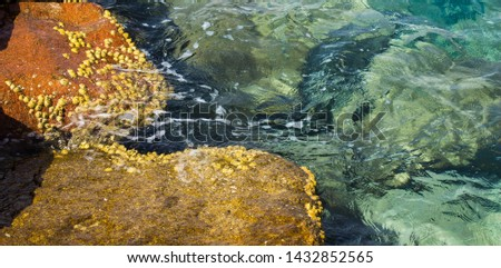 shallow water rocky coast line natural local background picture with seashells on a stone surface