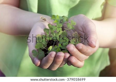 Shamrock in hands