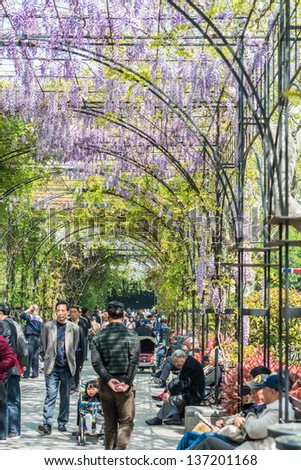 SHANGHAI, CHINA - APR7, 2013:people walking and and relaxing  in wisteria lane in fuxing park at the city of Shanghai in China on april 7th, 2013