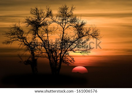 Shape of Silhouette Tree No Detail Only Line and Structure on Orange Sky and Red Big Sun at sunset .Tree leaf out have only branch and twig.