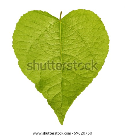 Shaped green leaf heart shape isolated on white