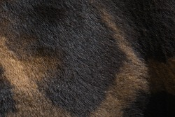 shapes and colors of the skin of a giraffe in the field. animals