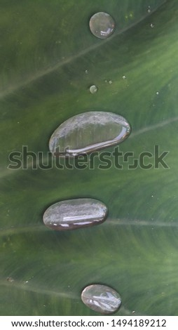 Shapes of water. Shapes of water in a leaf #1494189212