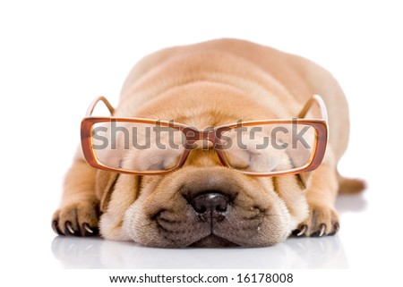 Shar Pei baby dog, almost one month old, with glasses