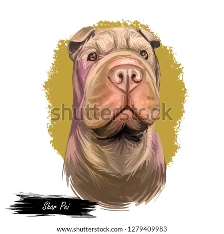 Shar Pei purebred type of dog originated from China digital art. Isolated watercolor portrait of pet close up, animal profile and text, hound breed with smooth coat fur doggish snout muzzle.