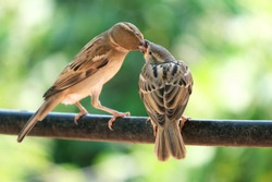 sharing is caring, sparrow love.