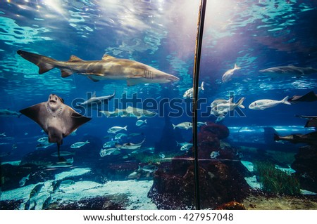 Shutterstock shark and ray swimming in large sea water aquarium