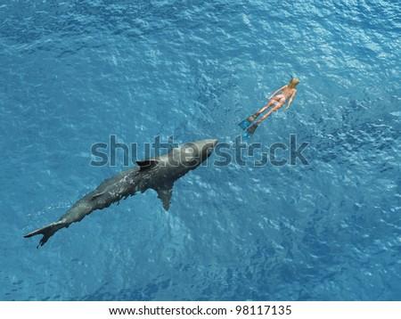 Stock Photo Shark diver pursues