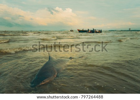 Stock Photo Shark hunting, catch shark. Royalty high quality free stock photo image of shark on the beach and fishing boats in Long Hai beach, Vietnam. Fisherman and people catch sharks for fins