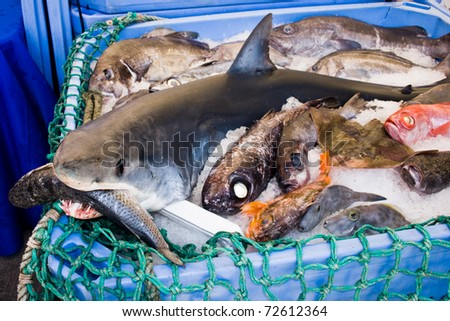 Shark in a basket with other on fishmarket in auckland for Sharks fish chicken birmingham al