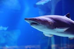 shark in the pool underwater photo