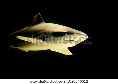 Shark passing on a black background
