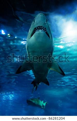 Shark silhouette underwater. Danger concept
