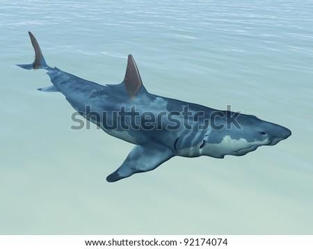 Shark Up Close Computer generated 3D illustration