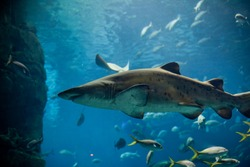 Sharks and piranhas at the aquarium.