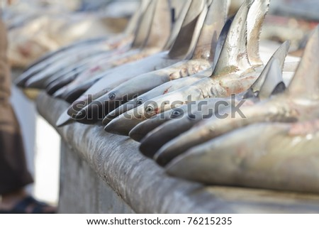 sharks at a fish market, Dubai,United Arab Emirates