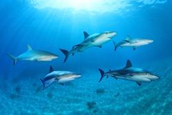 Sharks in the Ocean (Composite)