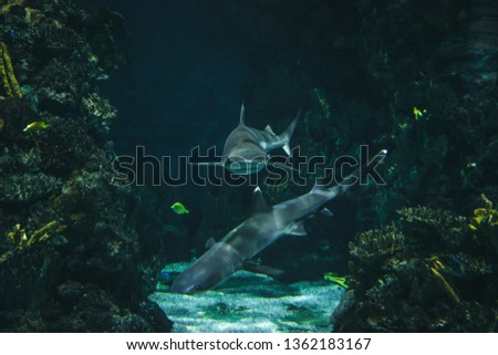Sharks swim in the aquarium with other fish, Barcelona - Spain stock photo