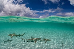 Sharks swimming in a sandy beach