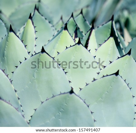 Sharp pointed agave plant leaves  #157491407